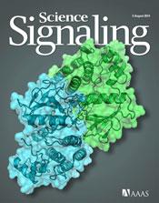 ARAFキナーゼの二量体化はMAPK経路の活性化と細胞遊走を促進する