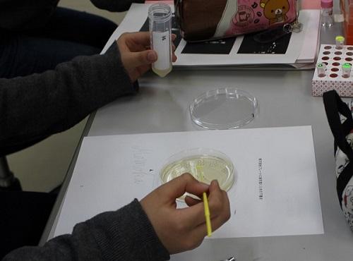 実習「光る大腸菌を作ろう!」
