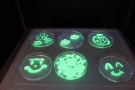 大腸菌の形質転換