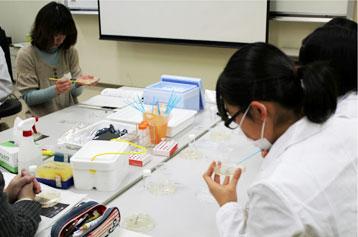 実習「遺伝子組換えで光る大腸菌を作ろう!」