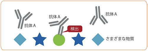抗体:免疫系の細胞で作られるタンパク質