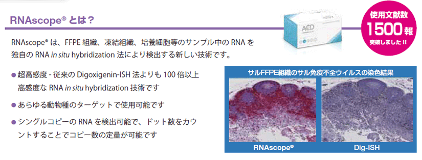 RNAscope(R)の詳細