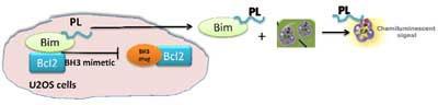 BH3ドメインに特異的な模倣体の同定