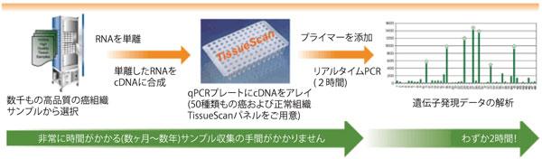 TissueScan 癌&正常組織cDNA アレイ