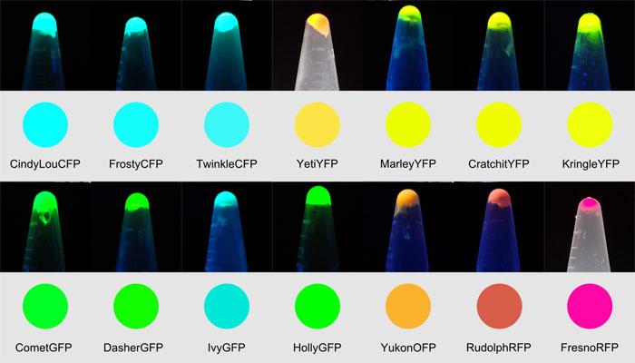 蛍光タンパク質