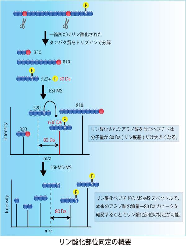 GNN_20130807_3.jpg