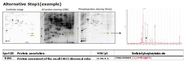 リン酸化ペプチドとして予測される質量値との比較によりリン酸化の可能性の予測