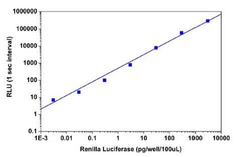 Amplite(TM)Renillaルシフェラーゼレポーター遺伝子アッセイキットで測定
