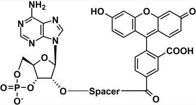 蛍光標識PDE基質 Phosphodiesterase (PDE) Assay