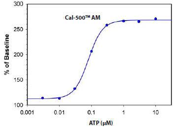 Cal-500(TM) AM による、ATP刺激したCHO-K1細胞の細胞内カルシウム応答