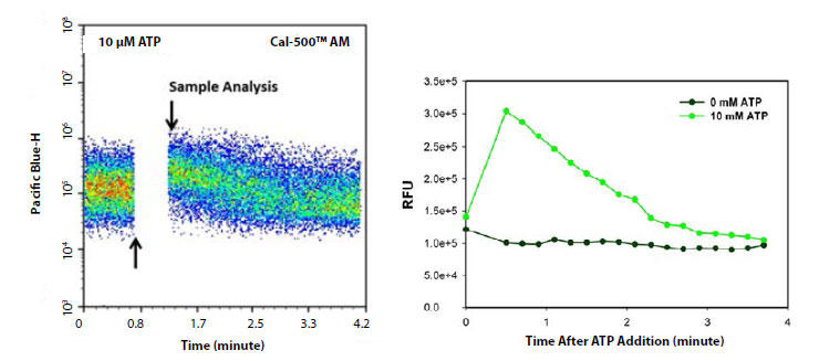 Cal-500(TM) AM による、ATP刺激した CHO-K1細胞の経時的細胞内カルシウム応答