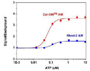 細胞内カルシウム応答