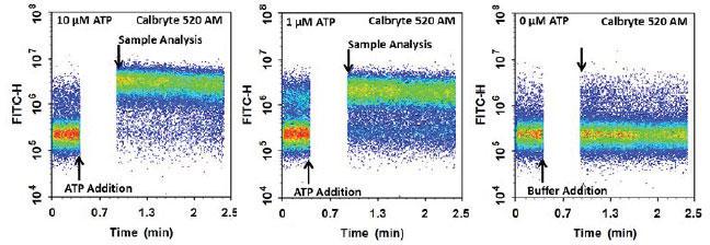 ATP刺激した CHO-K1細胞の継時的細胞内カルシウム応答 (フローサイトメトリー解析)