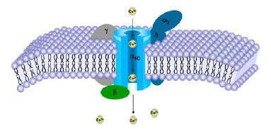 カルシウムイオンの生理的効果の例