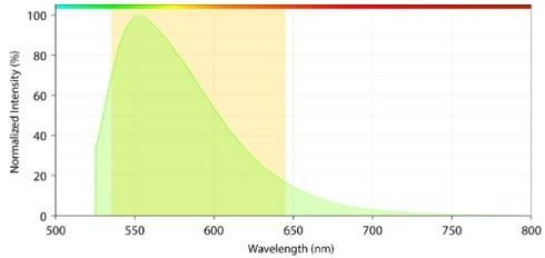 励起および発光スペクトル