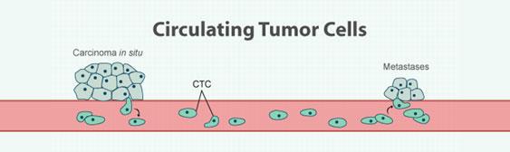 末梢循環腫瘍細胞 (CTC) 解析受託サービス