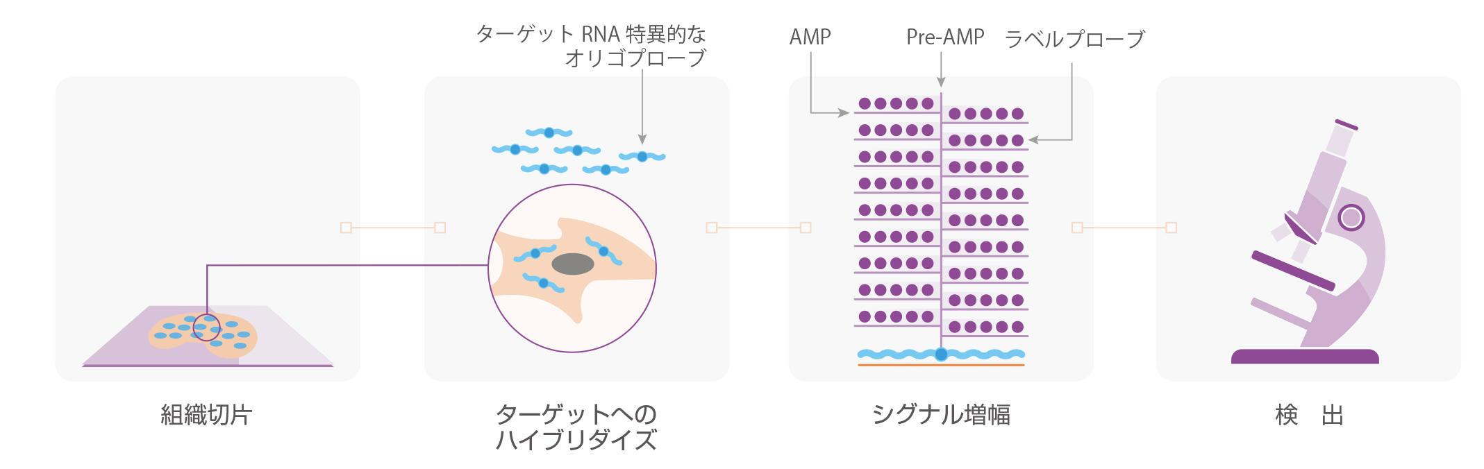 miRNAscopeのワークフロー