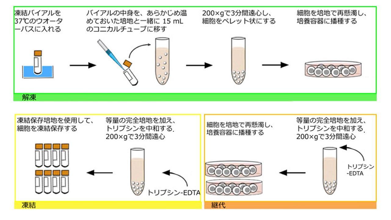 APB_Primary_cells_procedure_overview.jpg