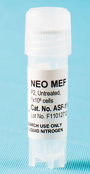 Neo-resistant MEF Feeder Cells