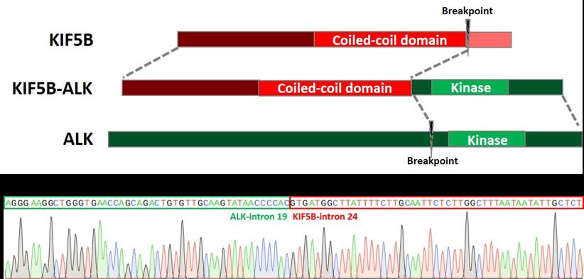 ASC_crispr_genome_editing_ipscs_3.png
