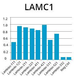 ELISA法による抗LAMC1抗体の解析