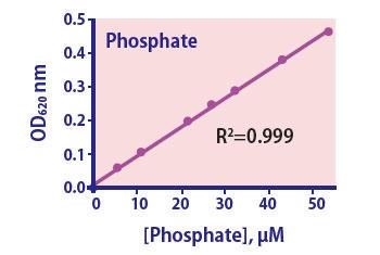 Phosphate Assay Kit