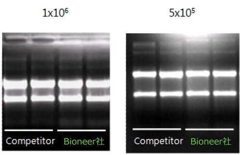 RNA精製実験におけるMagListo 5M Cell Total RNA Extraction Kit と他社製品(シングルカラムタイプ)との比較