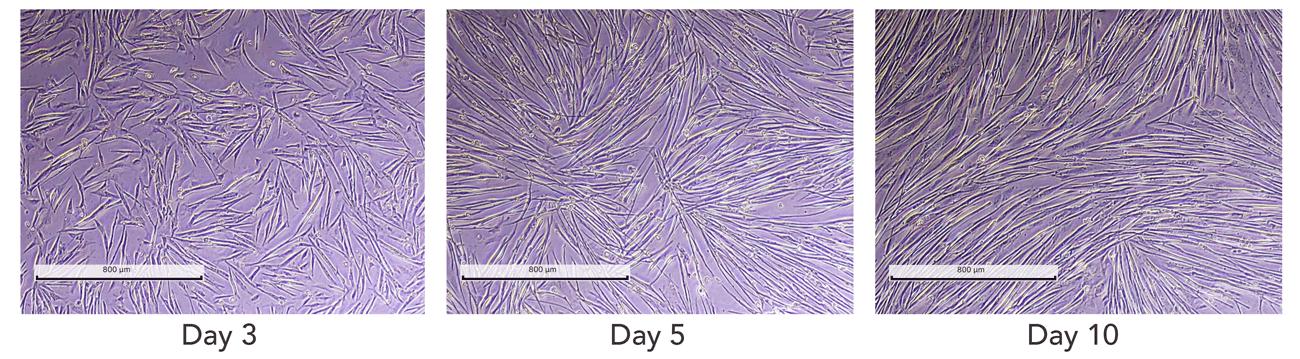細胞の形態