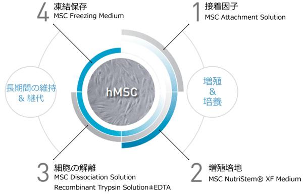 ヒト間葉系幹細胞培養ののゼノフリー(Xeno-Free)システム