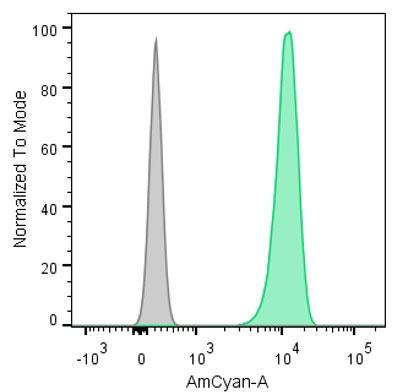 Jurkat 細胞のフローサイトメトリー解析
