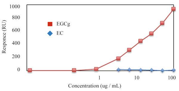 SPR測定にて抗カテキン抗体(クローン:b-1058)とエピガロカテキンガレート(EGCg)とエピカテキン(EC)の親和性を測定