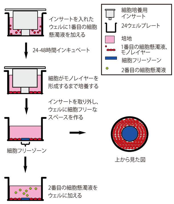 CytoSelect 24-Well 細胞共培養システム使用方法