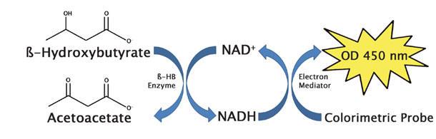 β-ヒドロキシ酪酸(ケトン体)アッセイ原理(比色法)