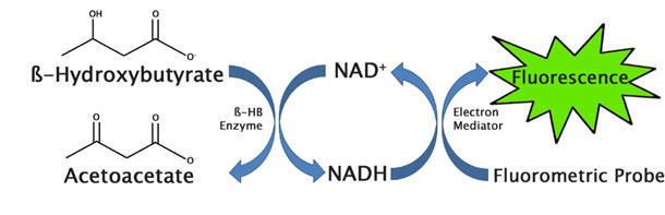 β-ヒドロキシ酪酸(ケトン体)アッセイ原理(蛍光法)