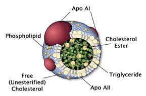 図2 HDL の構造