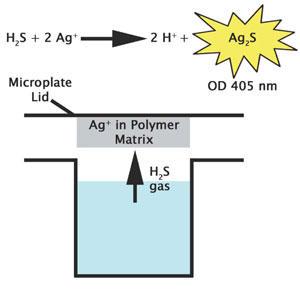遊離硫化水素ガスのアッセイ原理