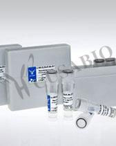 WUHAN HUAMEI BIOTECH(旧 Cusabio)社「活性タンパク質(サイトカイン)」トップへ