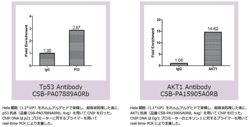 オートファジー研究抗体ChIP