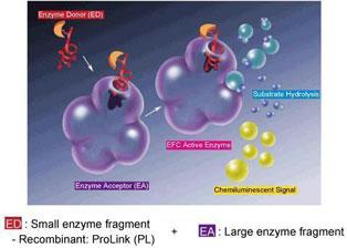 Enzyme Fragment Complementation(EFC)技術