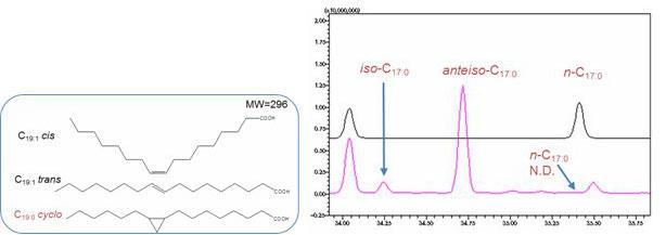 飽和脂肪酸 直鎖(n-), 分枝(iso-, anteiso-)