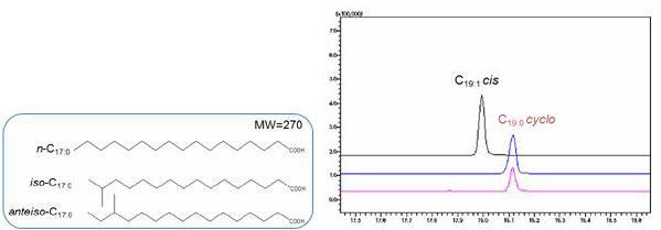 不飽和脂肪酸(cis, trans)、環状飽和脂肪酸(cyclo体)との区別