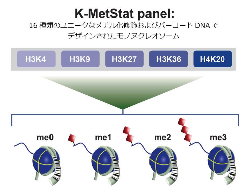 K-MetStat Panel