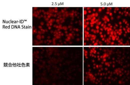 HeLa細胞 (細胞密集度〜60%) を、本試薬および競合他社色素で終濃度2.5μM、5.0μMで染色