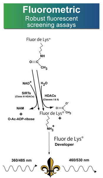 FLUOR DE LYS® HDAC アッセイ (蛍光)