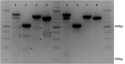 複数遺伝子を標的としたCRISPR-Cas9マルチプレキシング