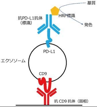 PD-L1 陽性エクソソーム(CD9)ELISA キット
