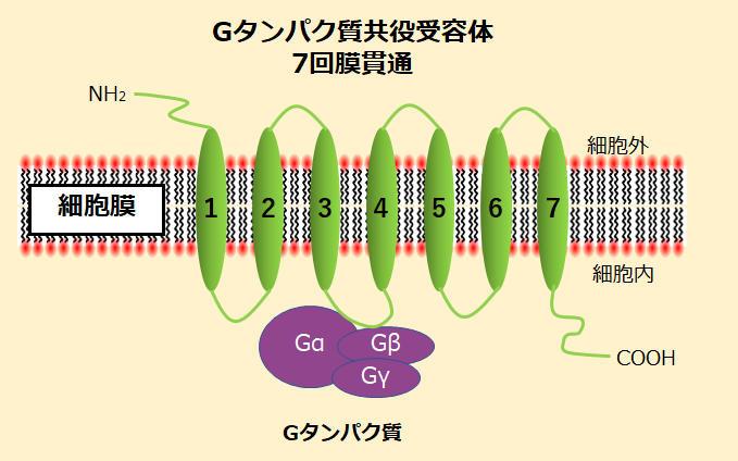 HAK_membrane_antibody_01.jpg