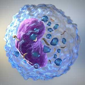 HEM_Cell-types.jpg