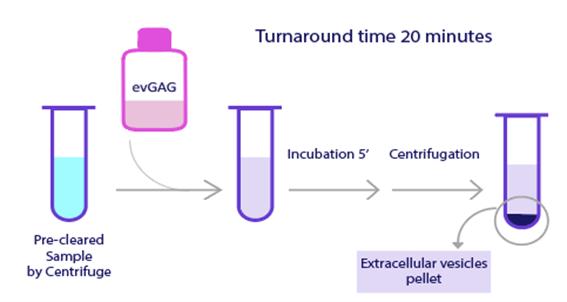 作業工程 evGAG Extracellular vesicles Purification Kit