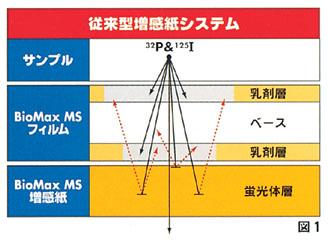 IBI_000259_00000246.jpg